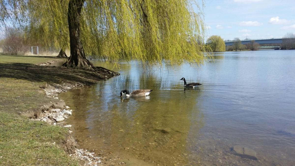 Runde um den Fühlinger See und Rheindörfer