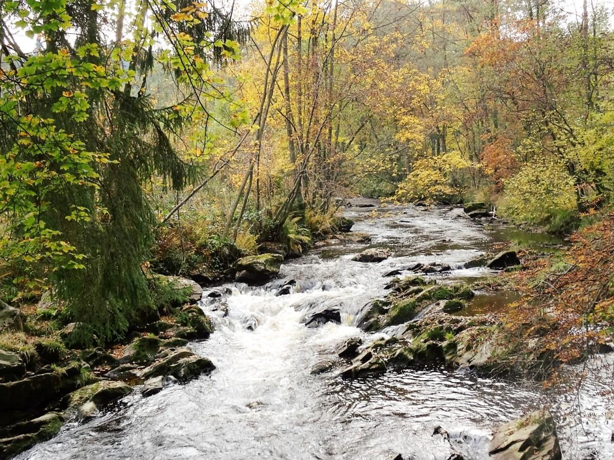 Wanderung zum Kloster Reichenstein und Ehrensteinsley