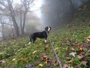 Jule im Nebel