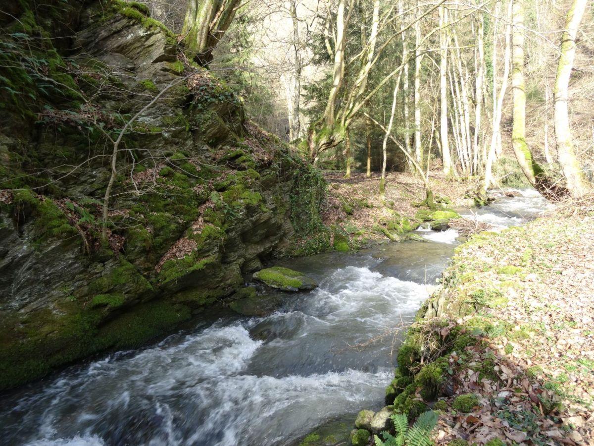Durch das Tal der wilden Endert - Cochem