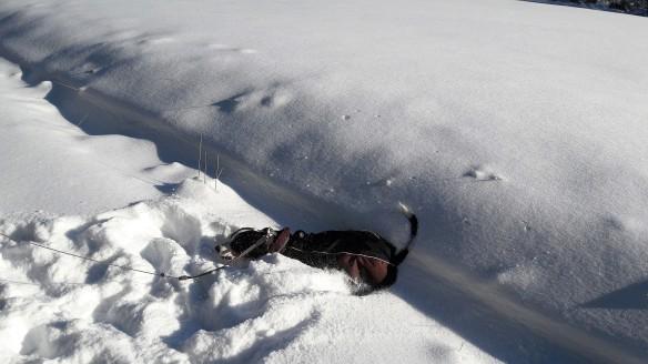 Jule taucht im Schnee