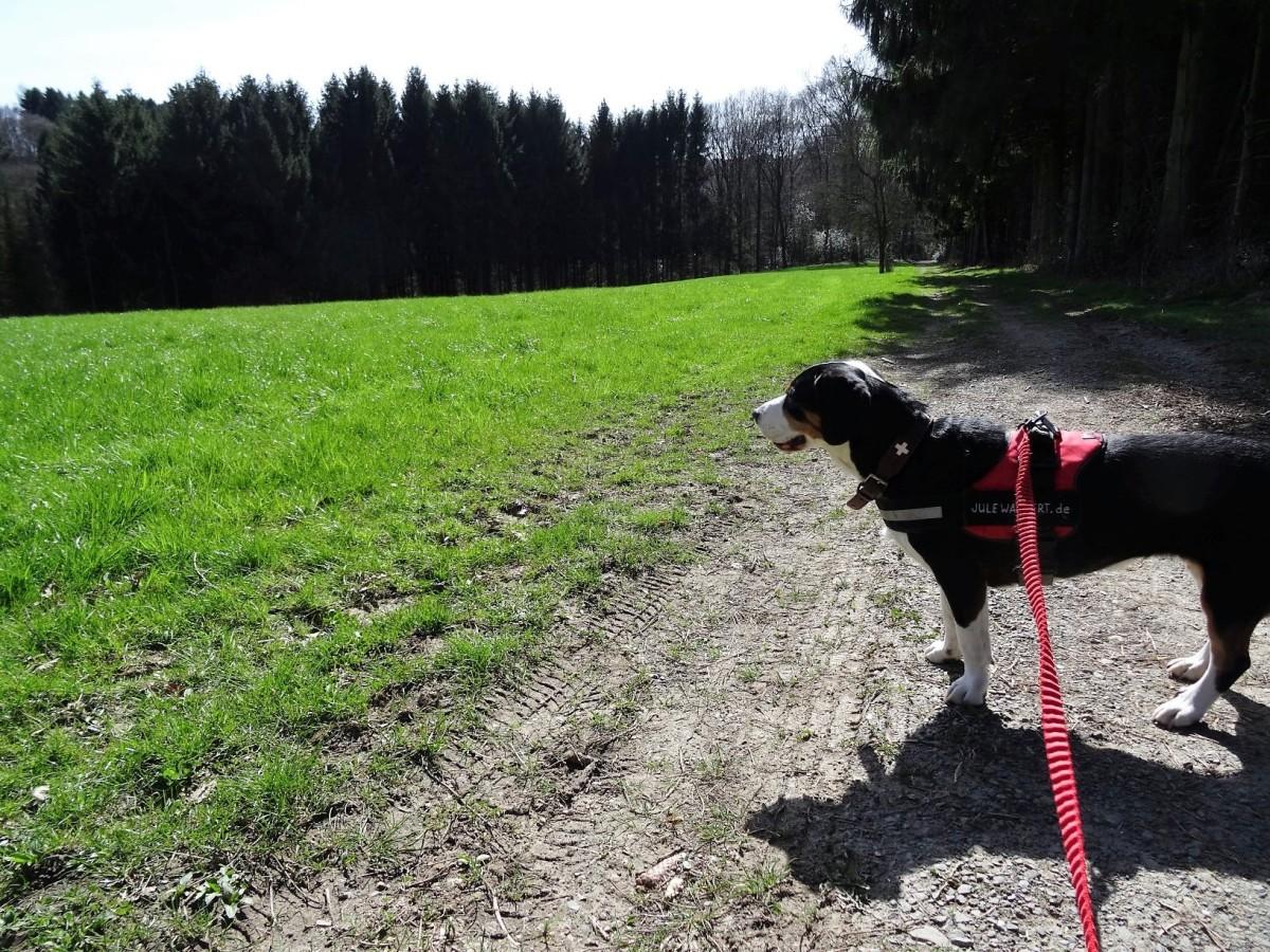 Wanderung ab Federath ins Schlingenbachtal