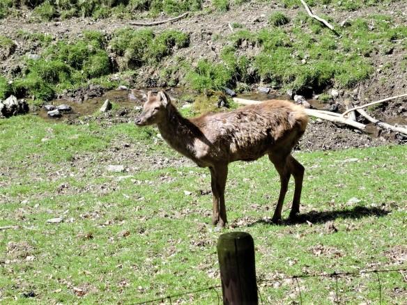 Wanderung im Wildpark Schmidt (1)