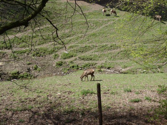 Wanderung im Wildpark Schmidt