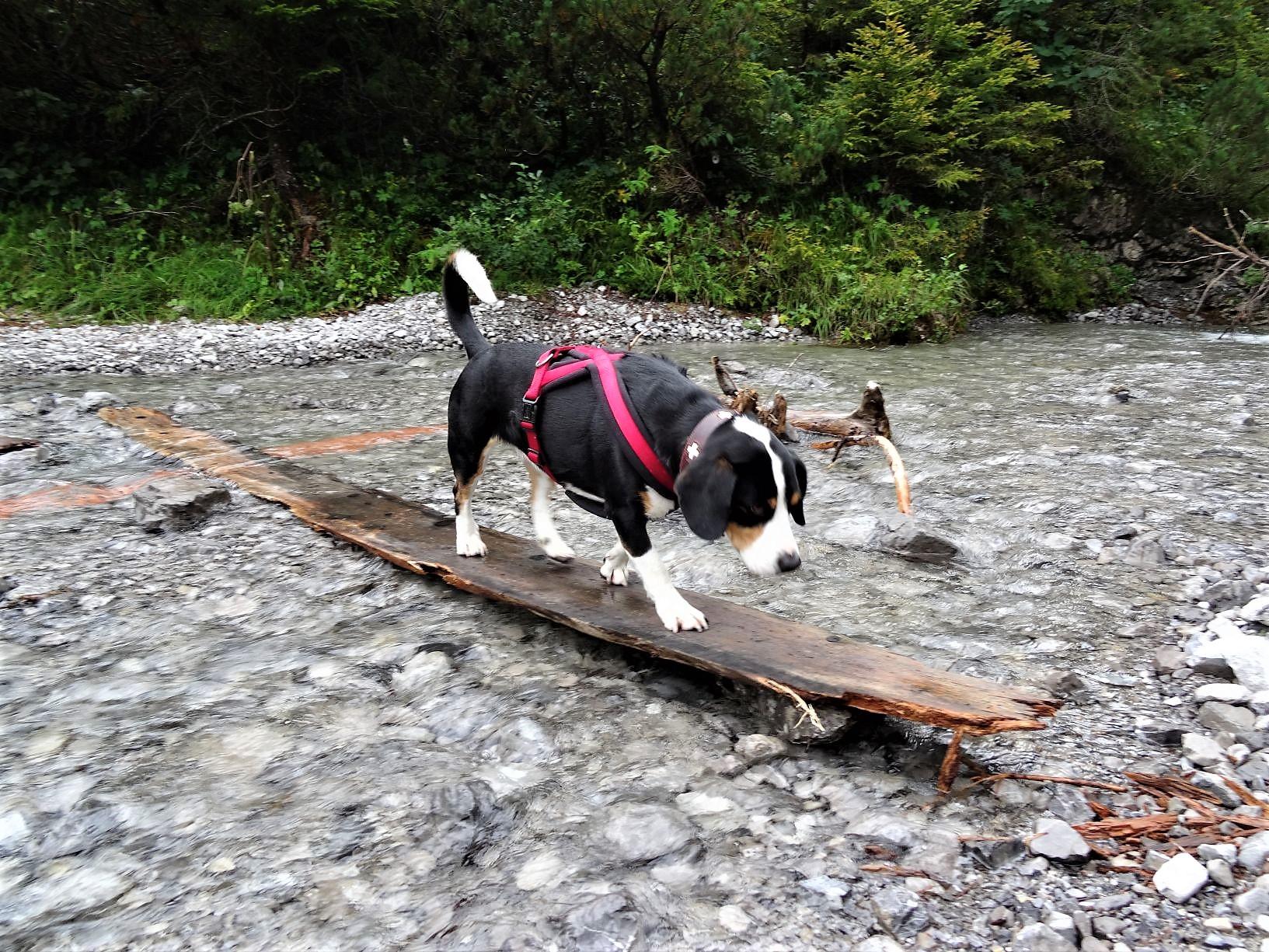 Lechweg mit Hund – Etappe 5 : Elbigenalb – Elmen