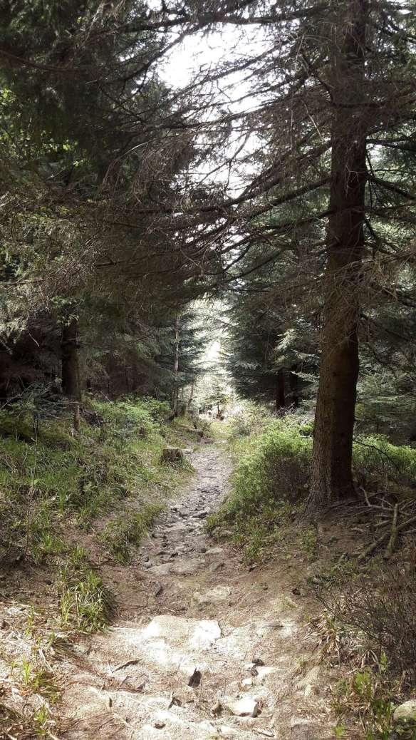 Jule wandert Single Trail / Wurzelwege