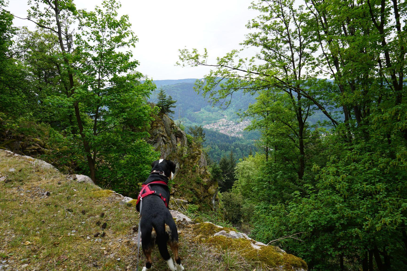 Wanderung zu den besten Aussichten über dem Murgtal