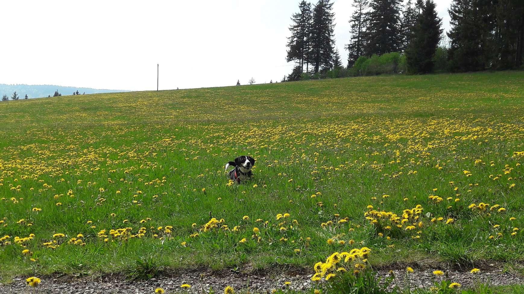 Campingplatz Wechsel – Schloß Glatt und Wanderung zu den Triberger Wasserfällen