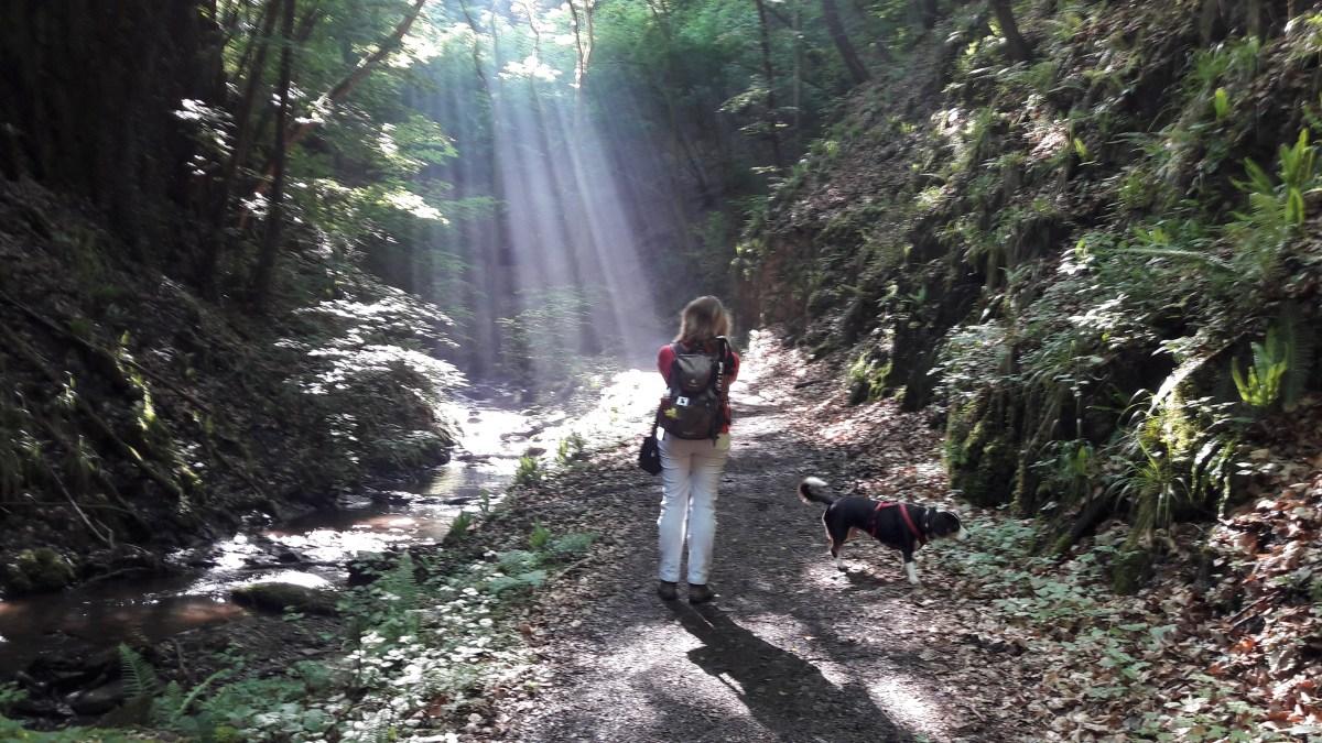 Wanderung durch die Ehrbachklamm
