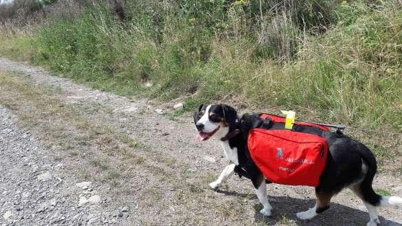 Jule mit Hunderucksack