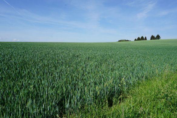 Feld und Wiesen Wege