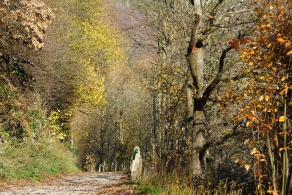Wanderweg am Rursee.