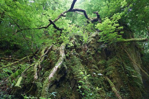 Waldgebiet am Brodenbach