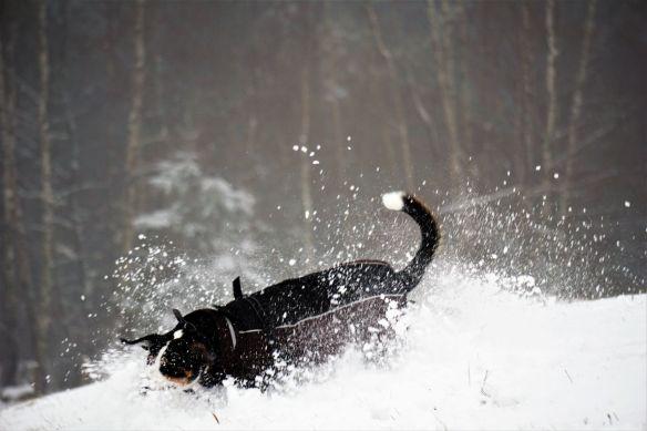 Jule im Schnee